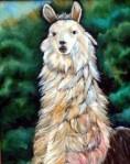 Colon, my pet llama.