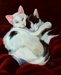 Pet Portraits-Loving Cats